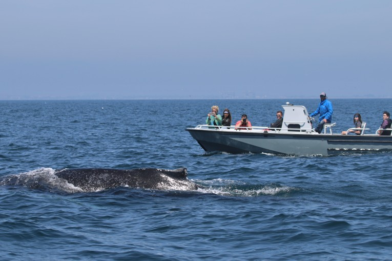 Humpback Whale and our Boat