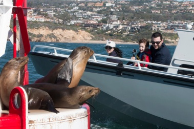 Visiting the sea lions